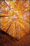 Осень в буковом лесу, Болгария